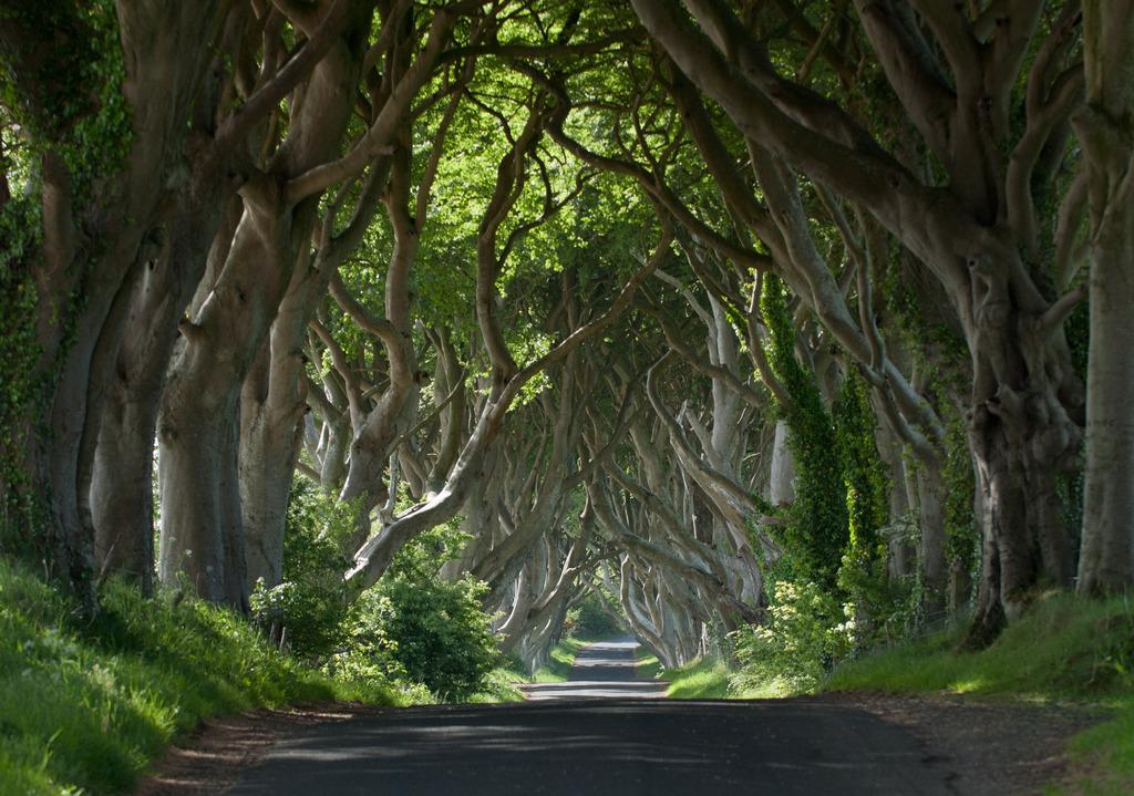 Films Ierland, Echt Ierland