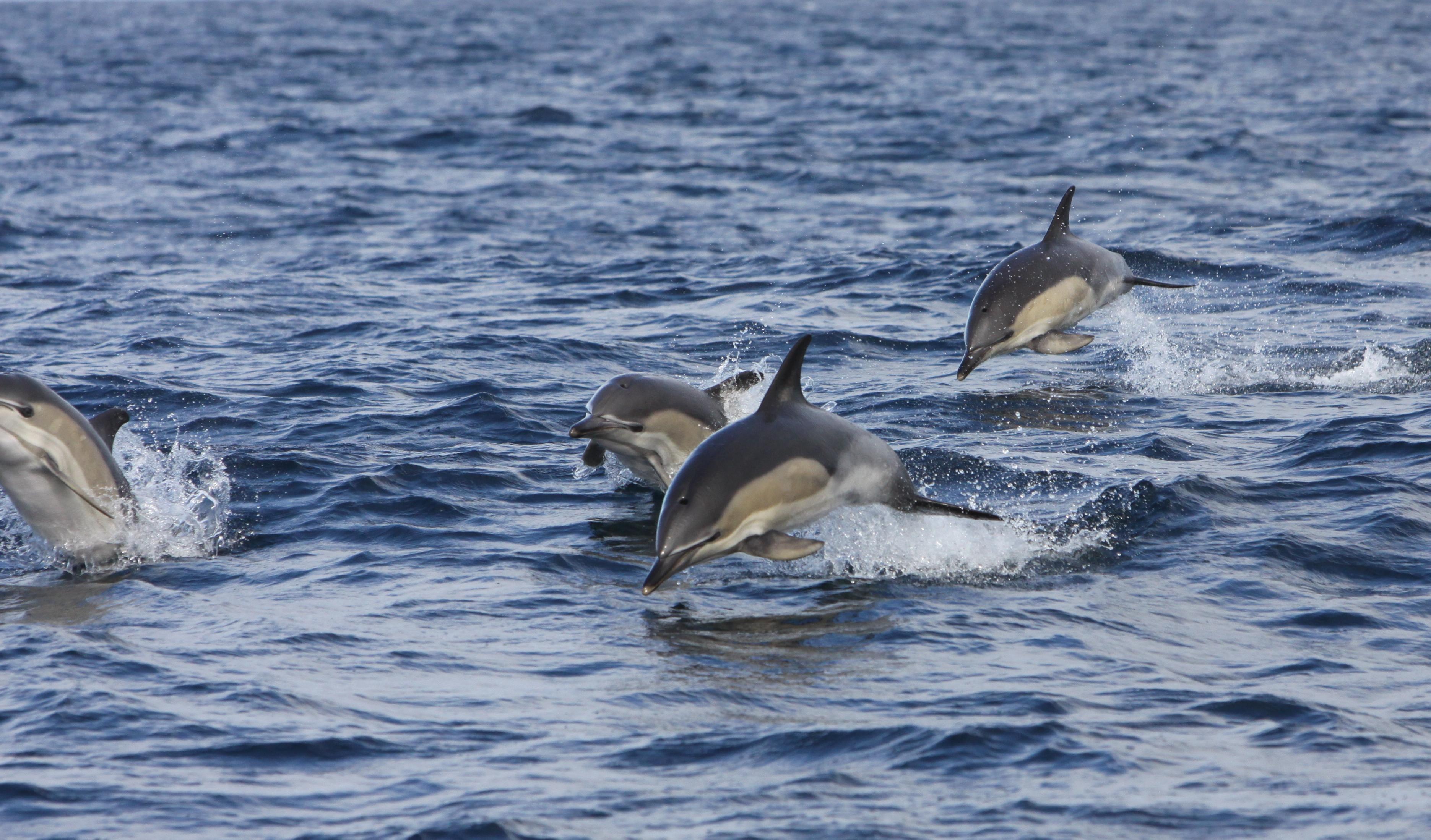 Dolfijnen spotten in Ierland, Echt Ierland