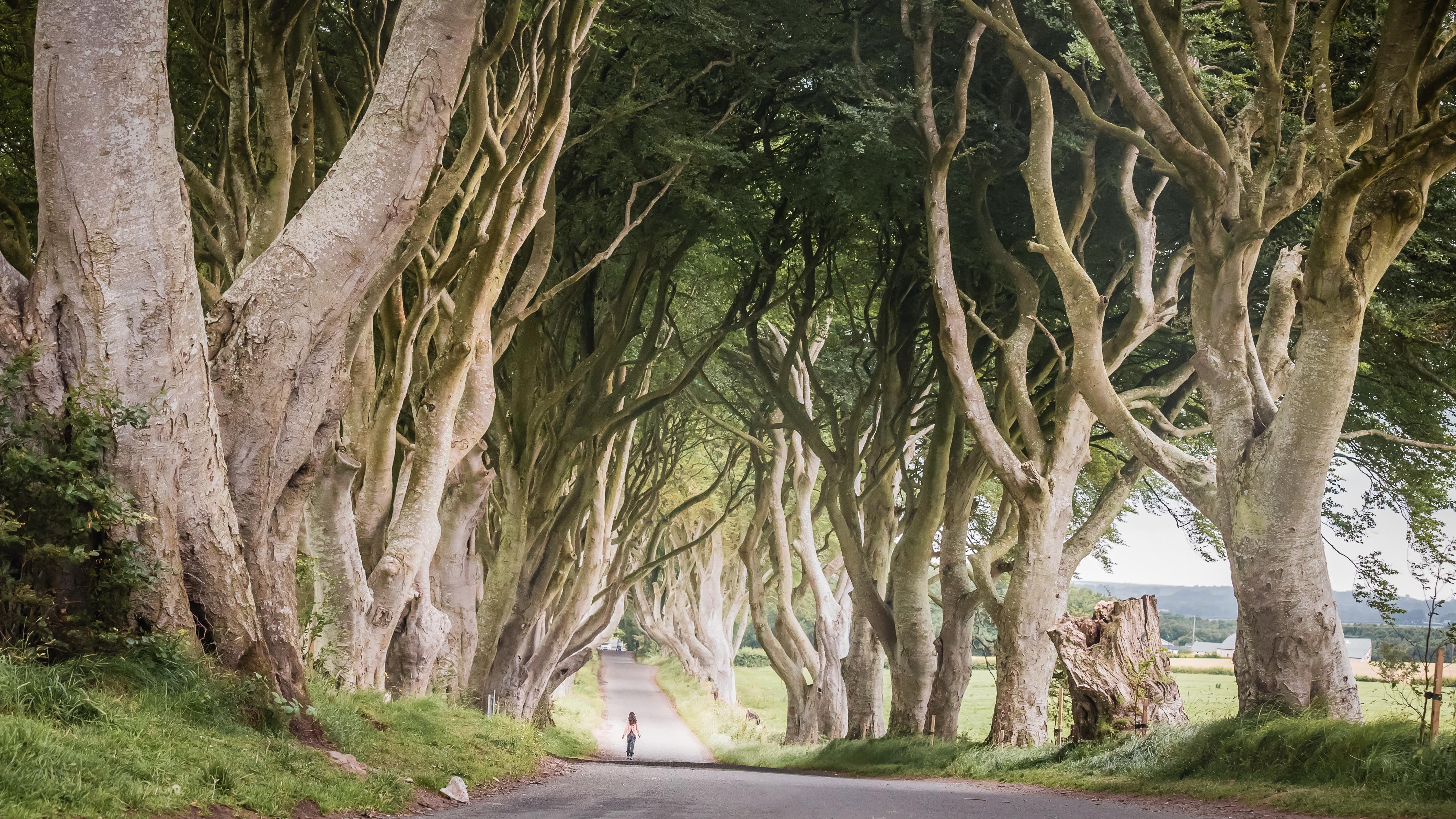 Echt Ierland, Dark Hedges, Vakantie ierland