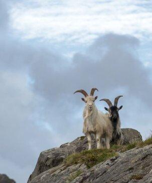 Echt Ierland, County Cork/Kerry, Ring of Beara, Fly drive ierland