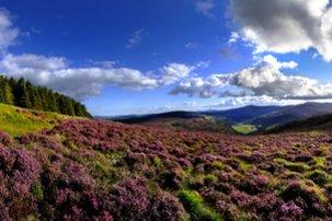 Echt Ierland, Wicklow Mountains, Vakantie ierland