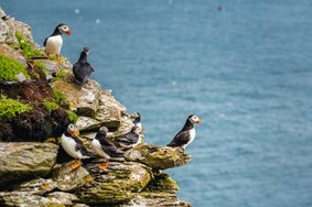 Echt Ierland, Skellig Islands, papegaaiduikers, Vakantie ierland