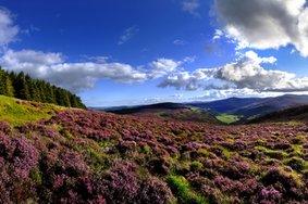 Echt Ierland, Wicklow Mountains
