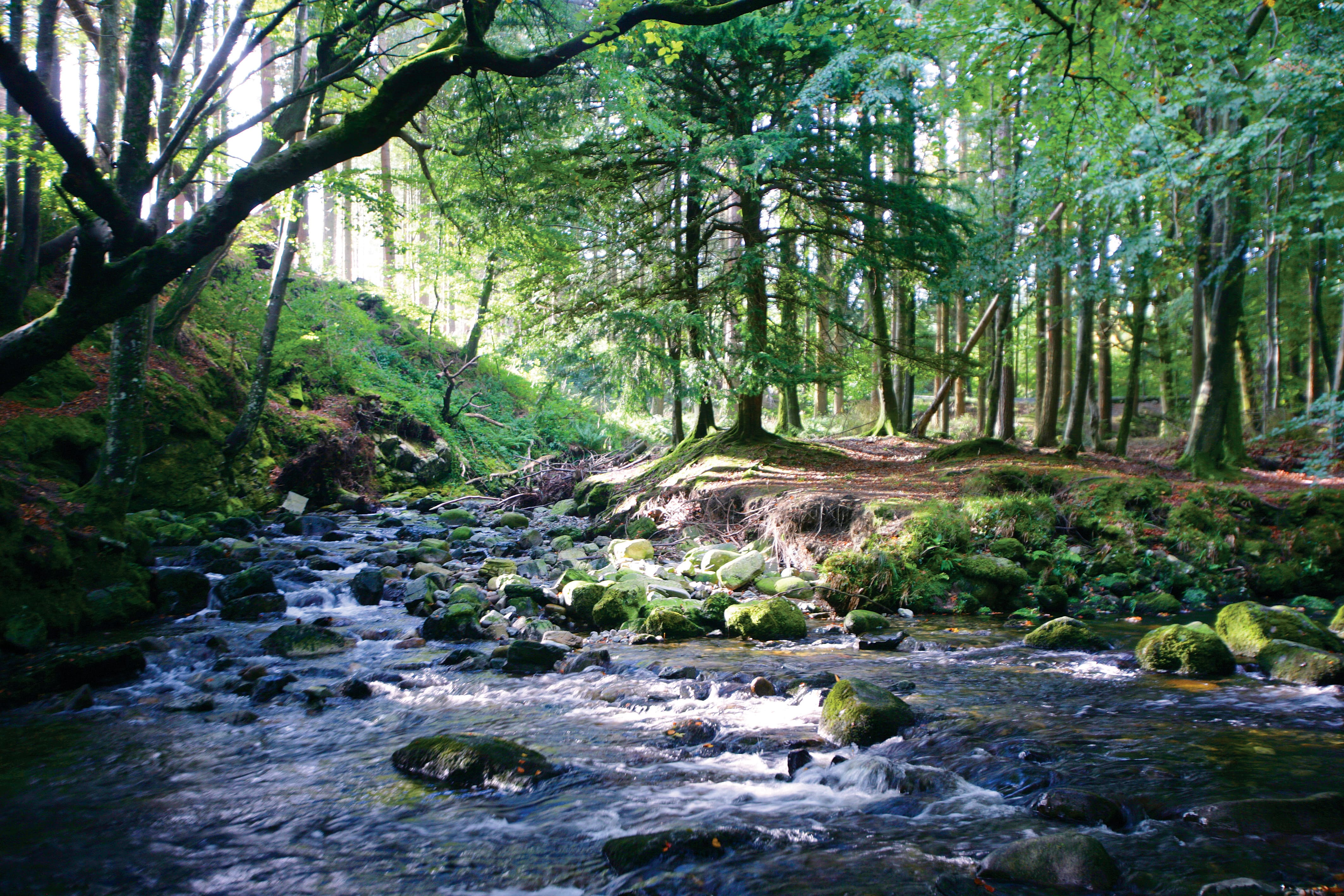 Tollymore Forest Park, co. Down, Echt Ierland